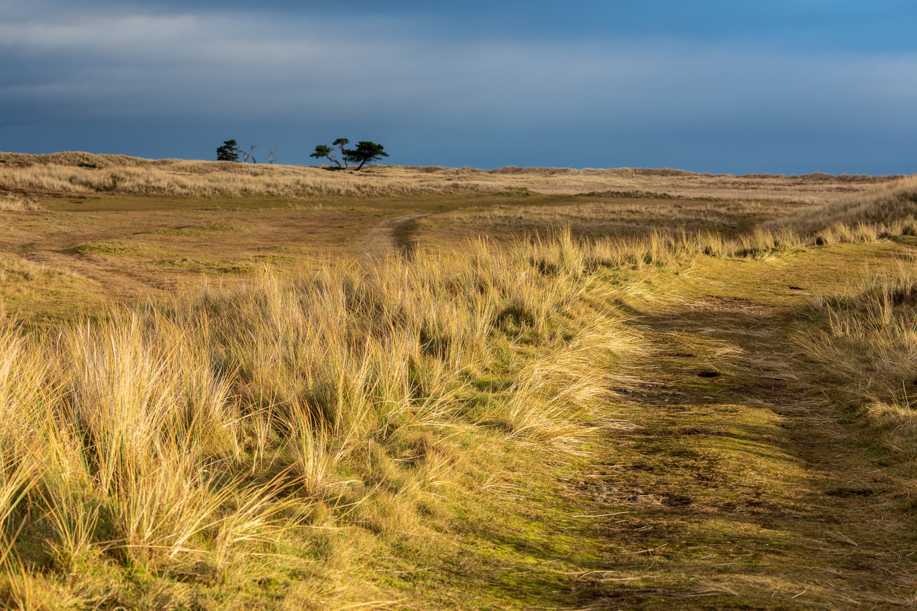 Littleferry dunes