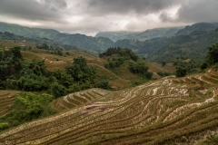 Rice terraces, Muong Hoa Valley