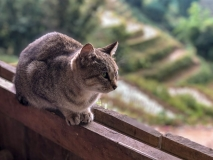 Cat, Muong Hoa Valley