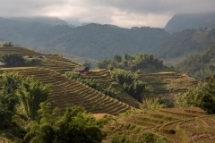 Sunlight and rice terraces, Muong Hoa Valley