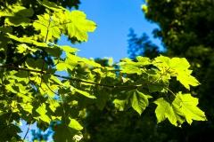 Shropshire leaves