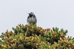 Bird on gorse