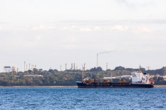 """Sand Heron"", Southampton Water"