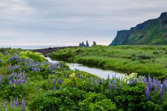 View to Reynisfjall, Vik
