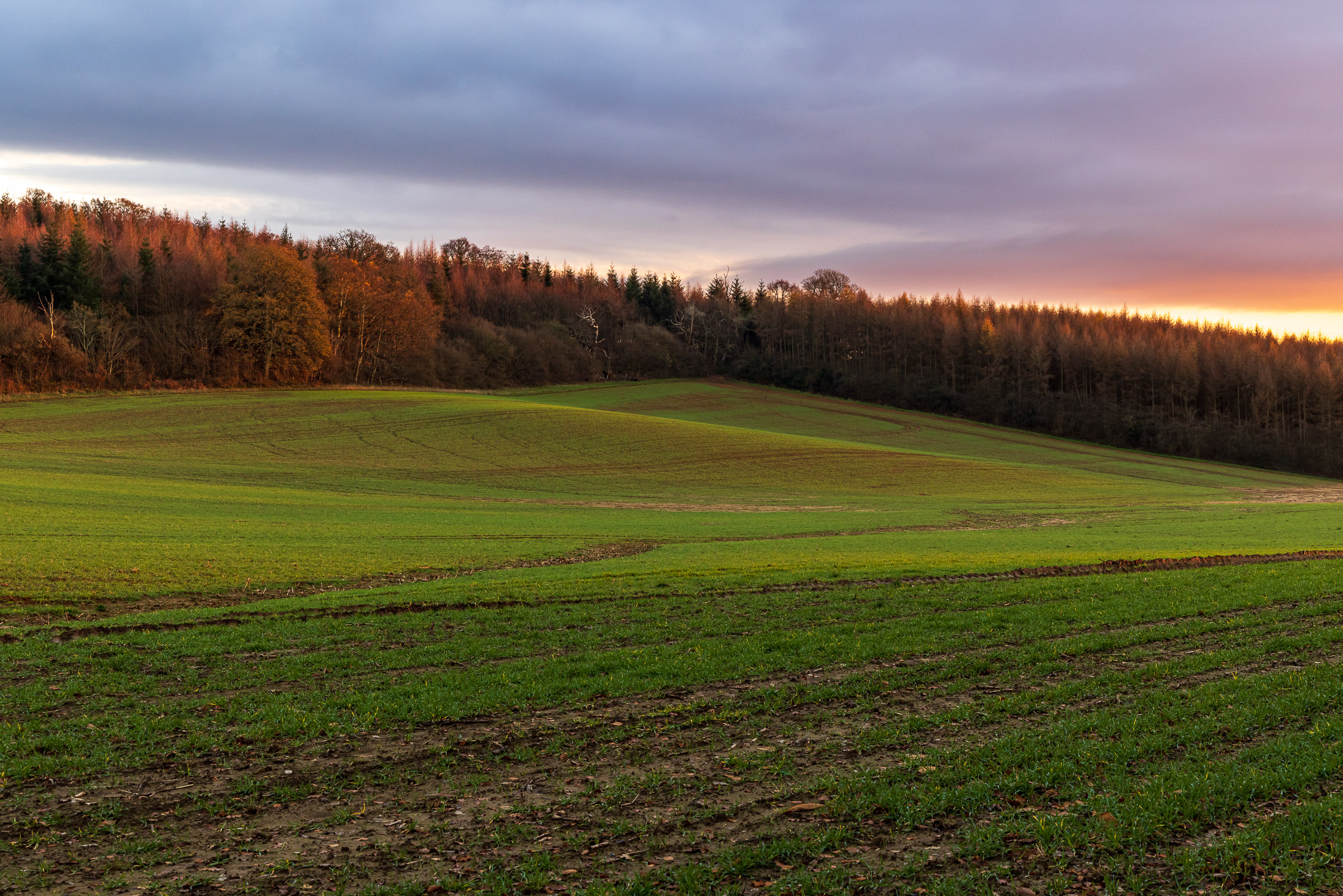 Sunset tones in the Sussex countryside