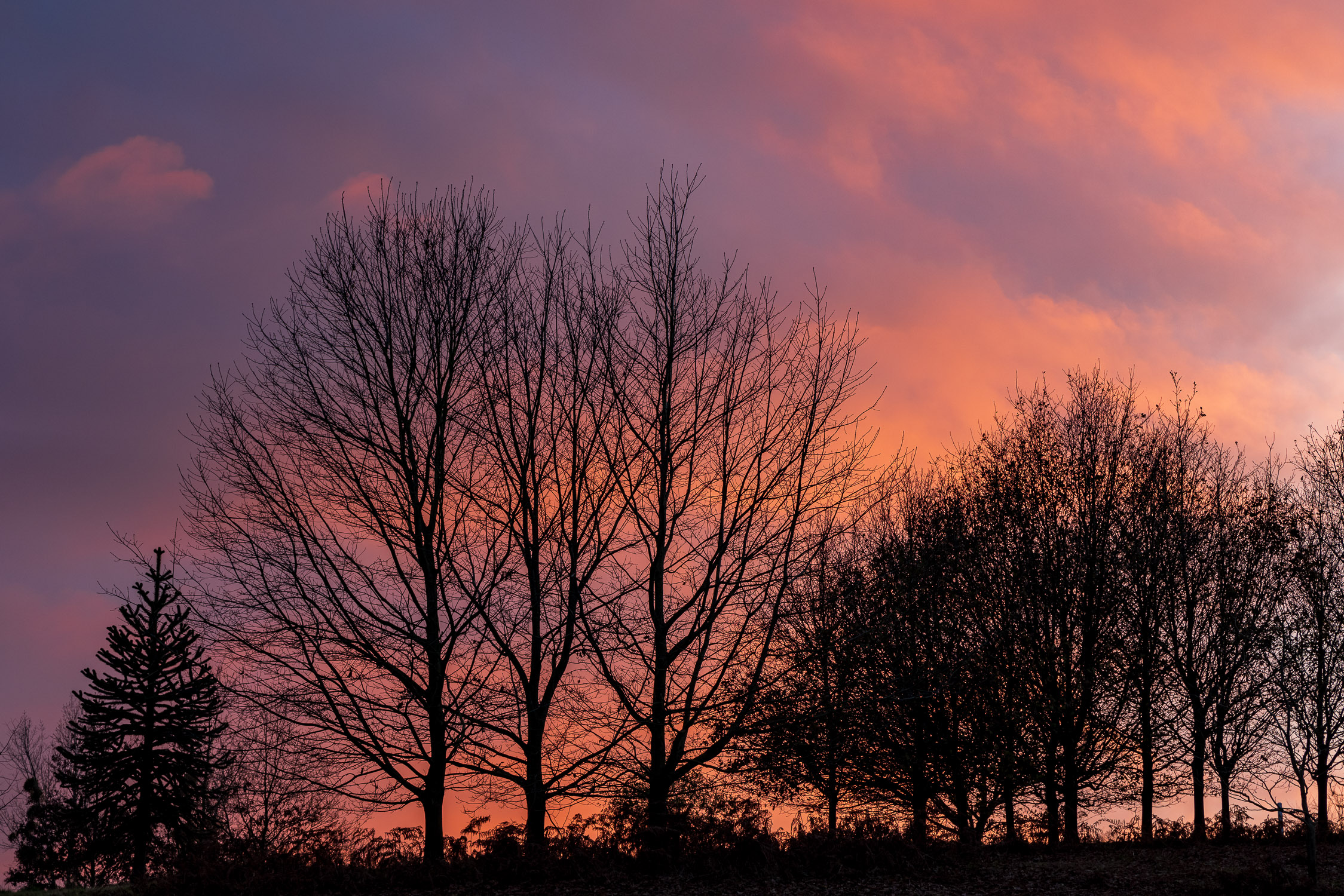 Trees silhouetted against a Winter sunset