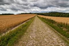 South Downs Way near Bignor Hill