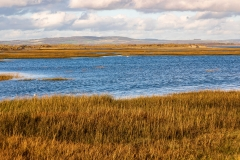 Chichester Harbour salt marshes