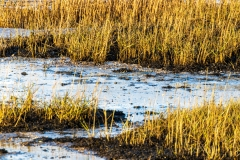 Close-up of Chichester Harbour saltmarshes