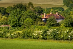 House nestling in trees in the South Downs near East Dean
