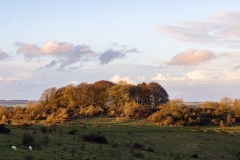 Copse of trees on Buxbury Hill