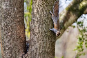 Squirrel hide and seek